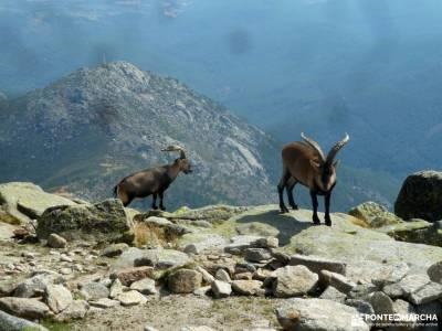 Mira,Los Galayos-Sierra de Gredos; rutas lagunas de ruidera imon viajes sierra bosque encantado urba